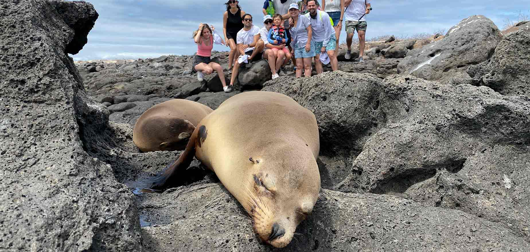 group of tourists in north seymour with some sea lions