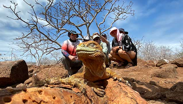 group of tourists observing a land iguana in north seymour